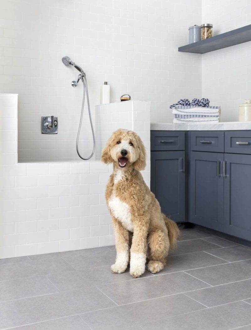 A dog modeling pet-friendly tile