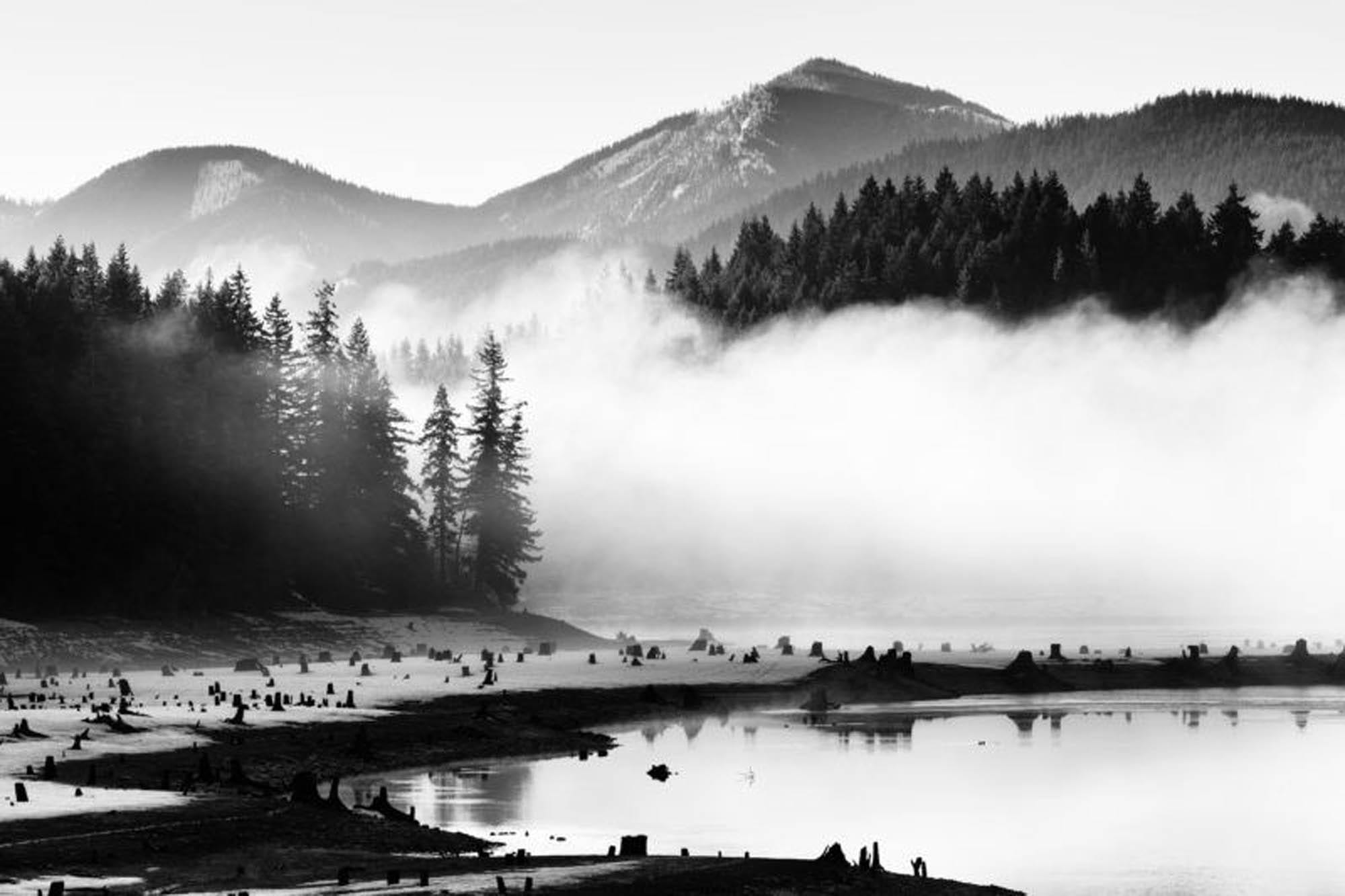 Nature photo in black-and-white tones.